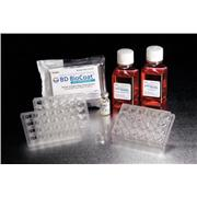 Thumbnail Image for Corning® BioCoat™ HTS Caco-2 Assay System