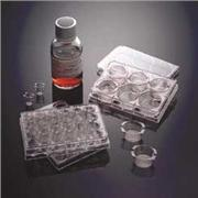 Thumbnail Image for Corning® BioCoat™ Matrigel®™ Matrix Thin-Layer Multiwell and Assay Plates